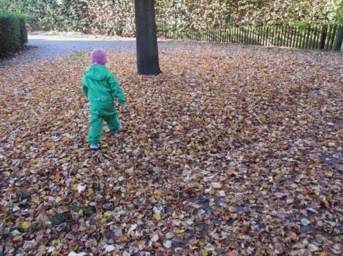 Hurra, neue Herbsterlebnisse! Schnell durchrascheln, bevor die Pracht im Kompost landet.