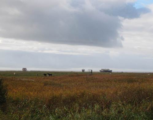 Entlang der Küste radeln wir vorbei an Pferden, Kühen und Schafen im Vorland - und an den SPO-Pfahlbauten am Horizont - Richtung Mittagessen.