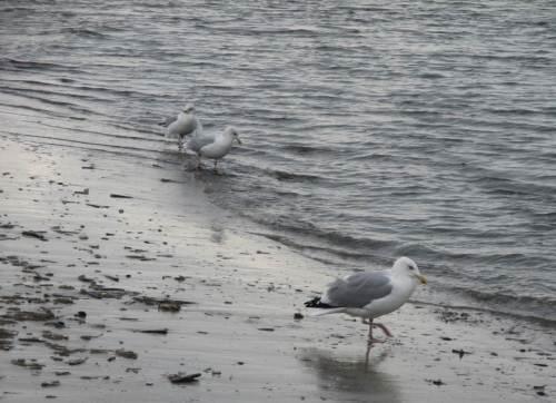 Nur der aufmerksame Sucher findet seinen Wurm / eine Strandkrabbe / eine Muschel.
