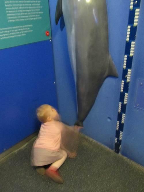"""Immer """"in action"""" - der Schweinswal bietet für Klein und Groß einen guten Vergleich. """"Wie groß bin ich?"""" ist immer eine spannende Frage."""