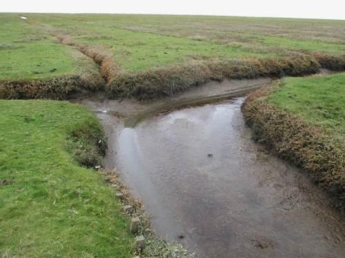 Was immer man möchte - bei Ebbe kann man in den Entwässerungsgräben Biologie und / oder Hydraulik erforschen - oder es auch lassen.