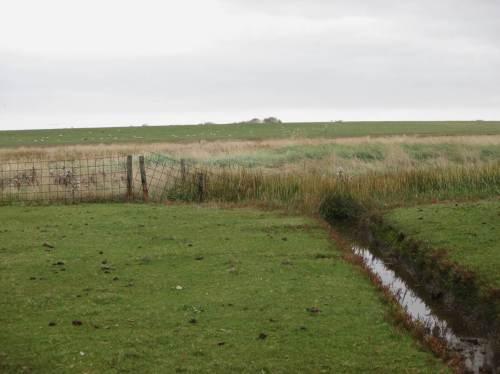 Blick Richtung Deich - 3 Nutzungsbeispiele: wie Golfrasen abgegrast - raue, unbeweidete Fläche - Schaf-gepflegter Deich für den Sturmflutschutz.