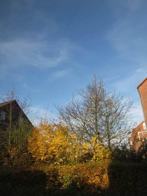 Bei all dem Grau und Schwarz - sage mal keiner, es gäbe nicht auch die hell erleuchteten Herbsttage.
