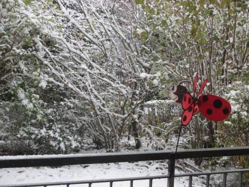 Noch fällt - kaum sichtbar - dünnflusig im 45-Grad-Winkel weiter Schnee. Der sturmerprobte Marienkäfer lacht.