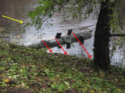 Wie gut, dass eine Erle das Ufer sichert und das Ufer steinreich ist. - Da mit der Strömung ausgerichtet, wird bei höheren Wasserständen überschiessendes Wasser voll in die Böschung gehen.