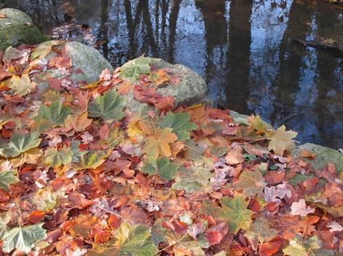 Herbstlich - ein kurzes Stück Stein-befestigter Uferweg entlang der Wedeler Au.