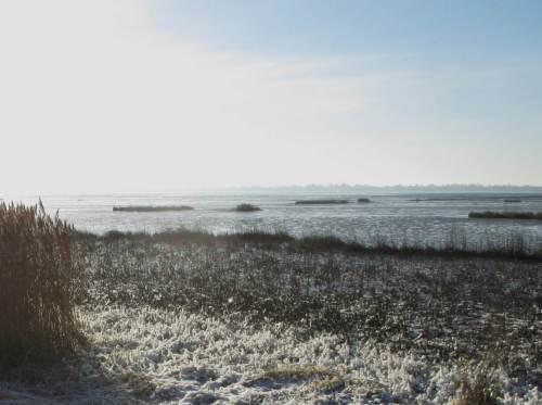 Süßwasserwatt Hetlingen - frostiger Tidehochwassersaum.