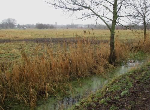 Leicht überstrapazierte Weide nahe dem Jahreswechsel. Der Marschgraben wird wohl demnächst noch den Mähkorb sehen.