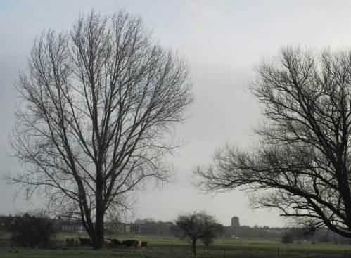 Die Rinder sammeln sich an den Kaventzmännern aus Heu - auf den Weiden finden sie so gut wie kein Futter mehr.