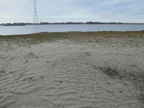 Auf dem Hochpunkt vor Erreichen des Strands: Rippelmarken aus aufgespültem Sand, Zeugen der vorigen Sturmflut.