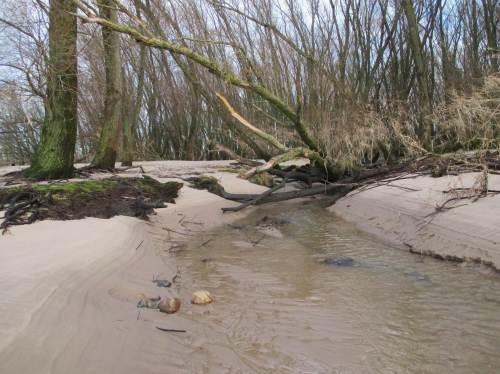 Ein Bach erreicht den Strand, entwässert das Deichvorland.