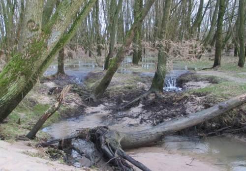 Der Bach aus dem TideAuwald - rückschreitende Erosion, Wasserfälle.