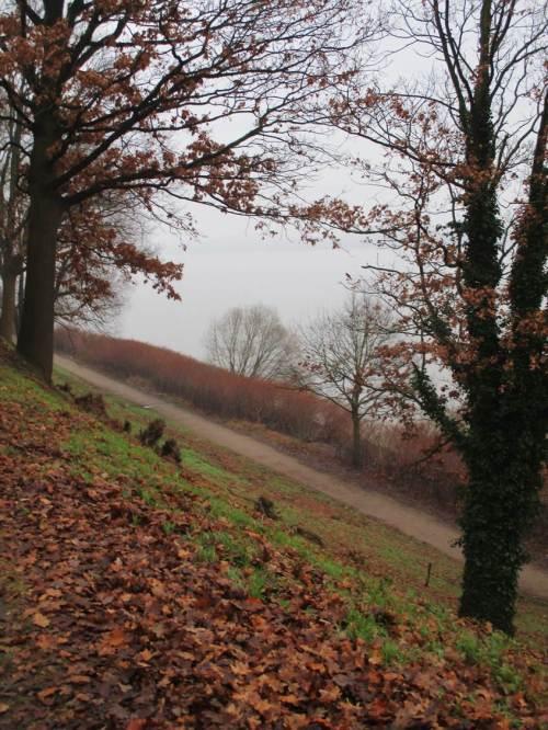 Blick nach Osten. SICHT ist das Zauberwort. Den Hang haltende Altbäume sind weitgehend beseitigt - auch hier wird in ca. 15 Jahren der Hang rutschen, wenn das Wurzelwerk kompostiert ist. Unten an der Elbe breitet sich derweil Japanischer Knöterich aus (schicker Wellenschutz?!), wir werden uns noch wundern.