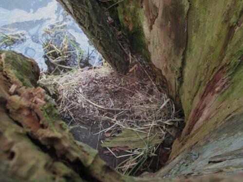 Blick ins Innere durch ein Loch oben im Stamm - dies trockene Plätzchen dient ganz offensichtlich zu teilweisem Aufenthalt. Wer wohl hier wohnt?