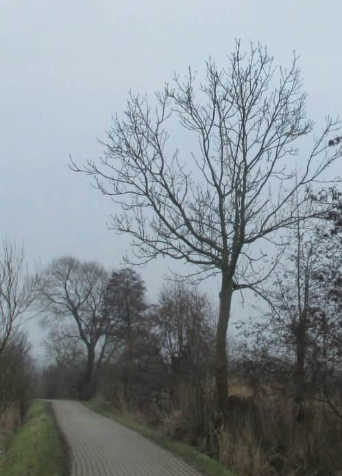 Noch eine kleine Baumstudie kurz vor Ende der Reise: Esche vor Schwarzerle und Weide.