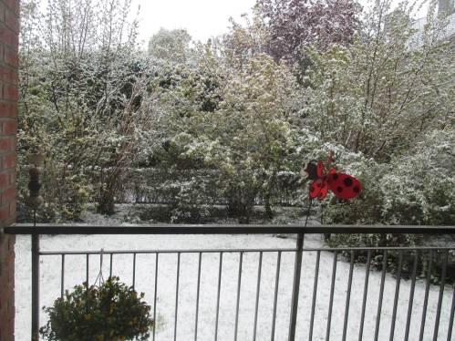 Kontrast zum roten Frosch, der rote Marienkäfer - während die Amphibien schon aktiv wurden, kam ein Kälteeinbruch über das Land.
