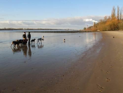 Die Dackelhündin meidet nasse Füsse. Hundescharen mit HundeSitterinnen sind meist sehr verträglich. Wohl den frühen Wanderern - später kommen oft genug rücksichtslosere Hundehalter (als - ehemalige - Hundebesitzer wissen wir, wovon wir reden).