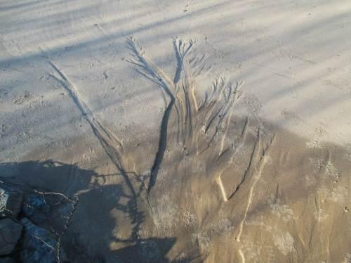 Ein Erosionsbaum, sieht aus wie ein Negativ, eingefräst von abgelaufenem Wasser.