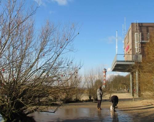 Holla, auf dem Hinweg nicht gesehen, jetzt von der Sonne beschienen: Weihnachtsbehang in einem Uferweidenbusch.