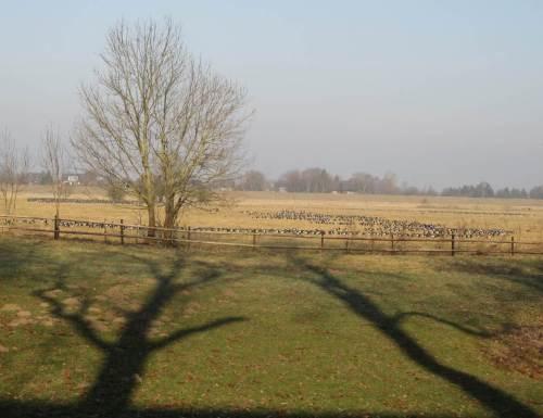 Nebendran, auf freier Fläche, grasen Nonnengänse in breiter Front.