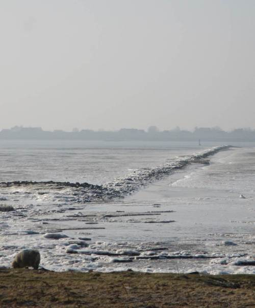 Bei dieser niedrigen Tideniedrigwassersituation (Schaf vor Buhne auf Süßwasserwatt) ist die gesamte Elbwassermenge auf den seeschifftiefen Schifffahrtskanal konzentriert.