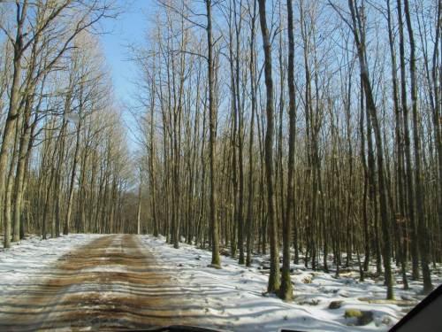Durch hügelige, teils stark kuppierte Moränenlandschaft hier mit Laubwald, geht unsere Fahrt.