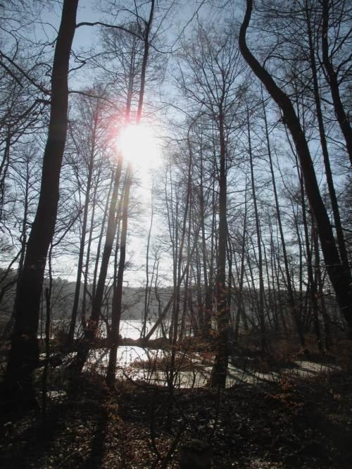 Aus den Moränenhängen quillt Quellwasser - dem See vorgelagertes Feuchtgebiet.