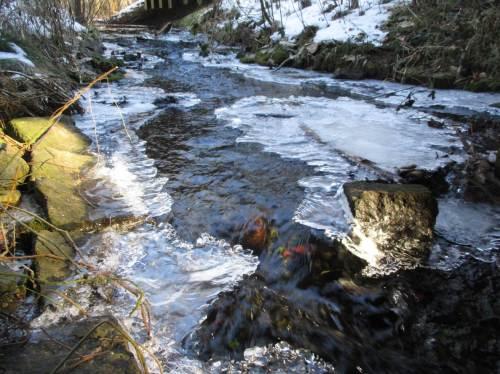 Blick bachauf Richtung Brücke - gutes Gefälle, Bachneunaugen, Mühlkoppen und Forellen bietet diese Bachstrecke Lebensraum.