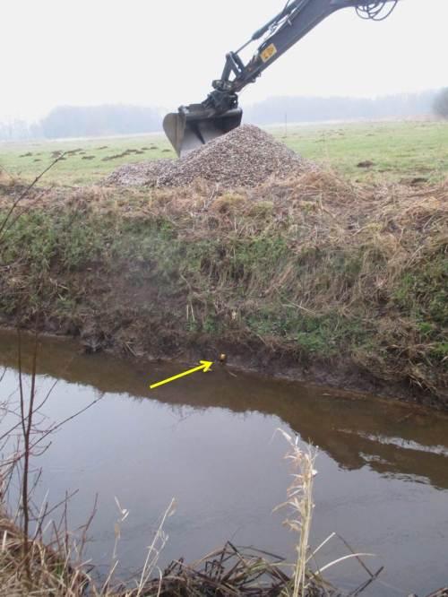 Dieser Dräneinlauf wird uns belegen, dass wir keine Wasserstandsanhebung verursachen - eine wichtige Grundlage für Akzeptanz in intensiv genutzter Agrarlandschaft (im städtischen Raum mindestens genauso - es soll schliesslich kein Keller feucht(er) werden).
