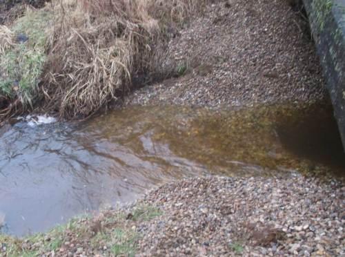 Auf dem Rückweg noch ein schneller Blick auf die bekieste Mündung eines Nebenbachs. Hier werden im April sicherlich erste Bachneunaugen laichen.