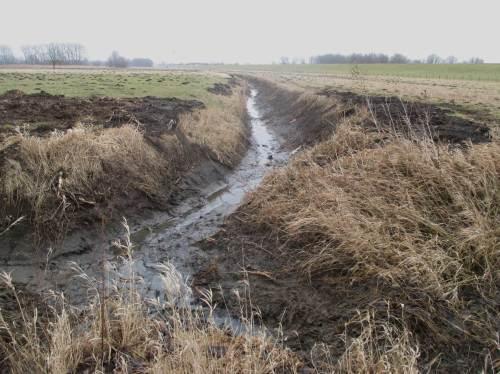 Dass die Marschgräben bis in die letzten Winkel heutzutage leerlaufen und für vielfältiges Gewässerleben heutzutage ausgefallen sind, hat allerdings mit etwas anderem zu tun. - Dazu mehr in einem späteren Blog-Beitrag.