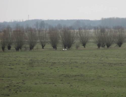 Geeignete Nistplätze sind gefragt - derweil die Maulwürfe auf Wiesen und Weiden die dritte Dimension einführen.