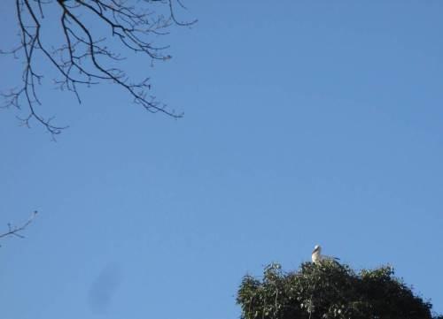 IMG_2316 - Storch sonnt sich im Nest auf der Idenburg